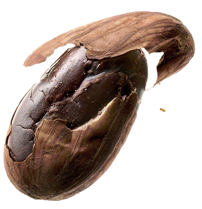 Cocoa Team